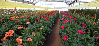 Pomysł na biznes: Produkcja kwiatów