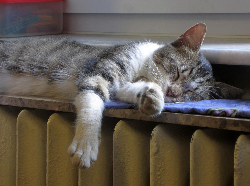 cat-1760731_960_720