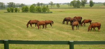 Hodowla koni – jak wybrać odpowiednią lokalizację dla swojego biznesu?