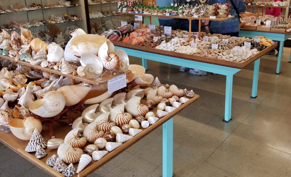 The-Shell-Shop-Morro-Bay-CA-Apr17-Bryce-11-Large-1000x609