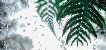 Energooszczędne okna i ich 5 najważniejszych korzyści